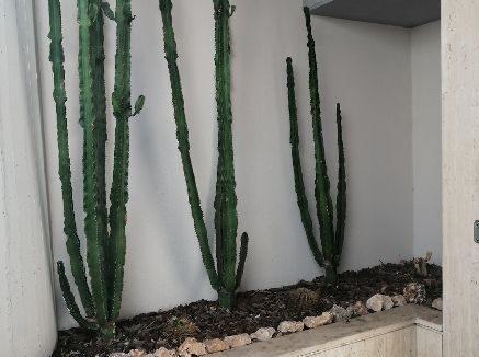 brogi 3 piante grasse (Copy)
